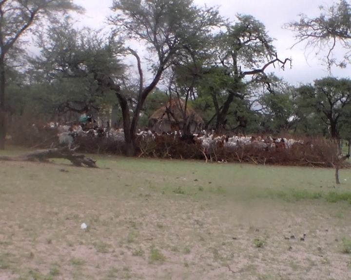 A small manmade enclosure full of goats