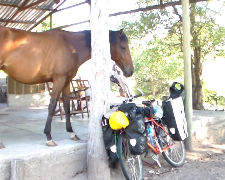 Horse vs. Bicycle