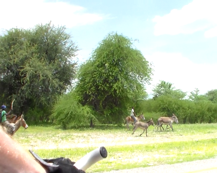 Even donkeys are faster than the bicycle...