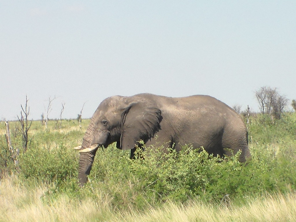 """The last week and days were spent as expected on very monotonous roads, the """"Elephant Highway"""" a stretch between Nata and Kasane in northern Botswana was very disappointing (one elephant!) but the mind bending boredom was almost over, soon I would be in populated areas, there would be more towns and shorter distances between them."""