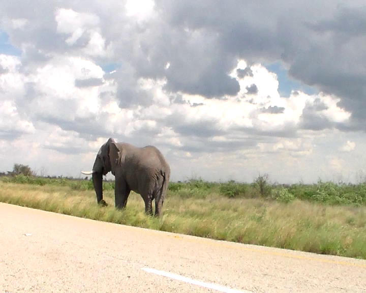 Off we go:Cycling toward the elephant