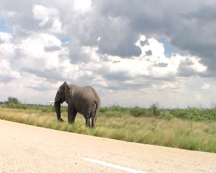 Off we go:Cycling toward the elephant