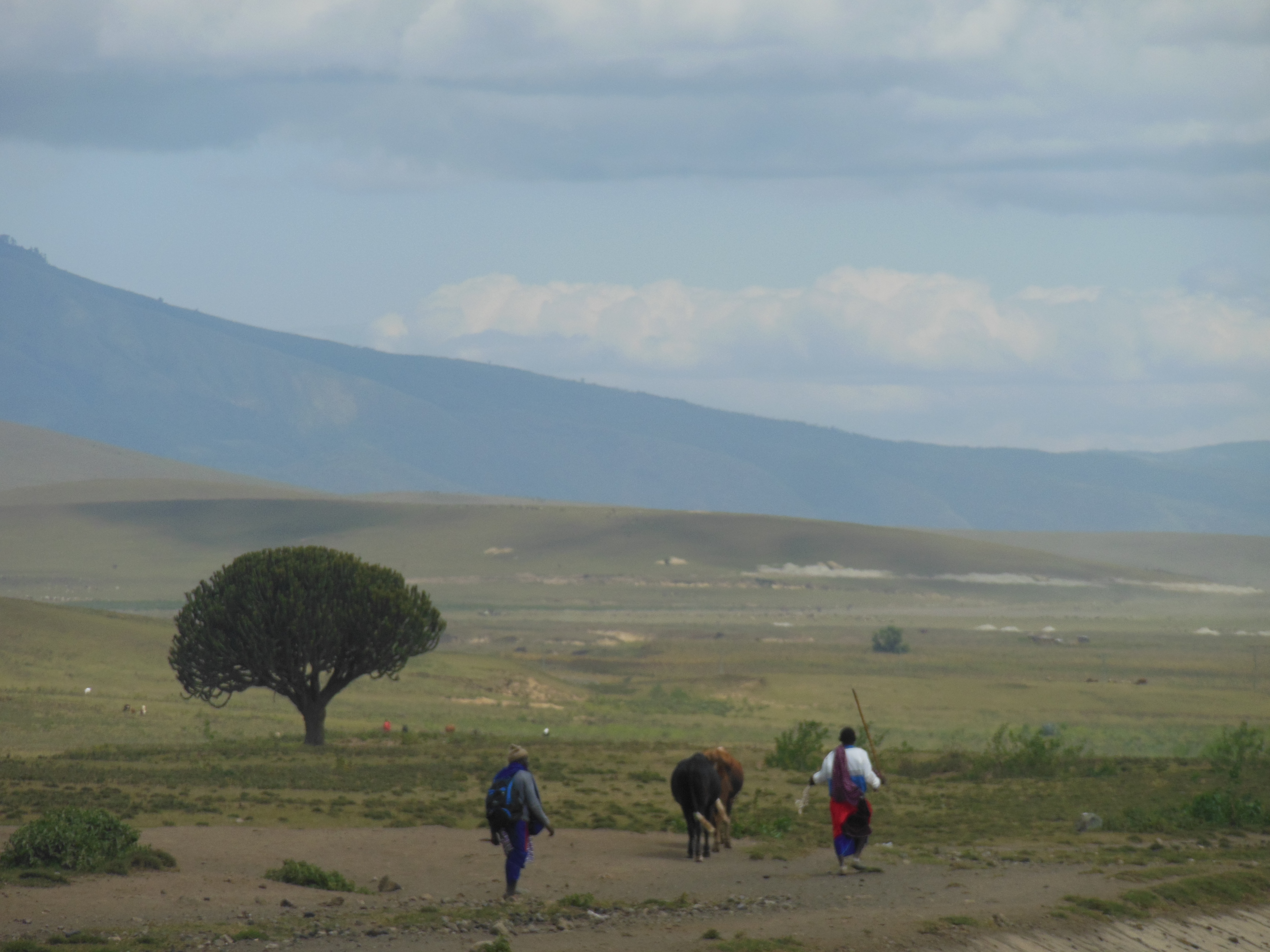 Tanzania PLain